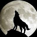 srgtwolf