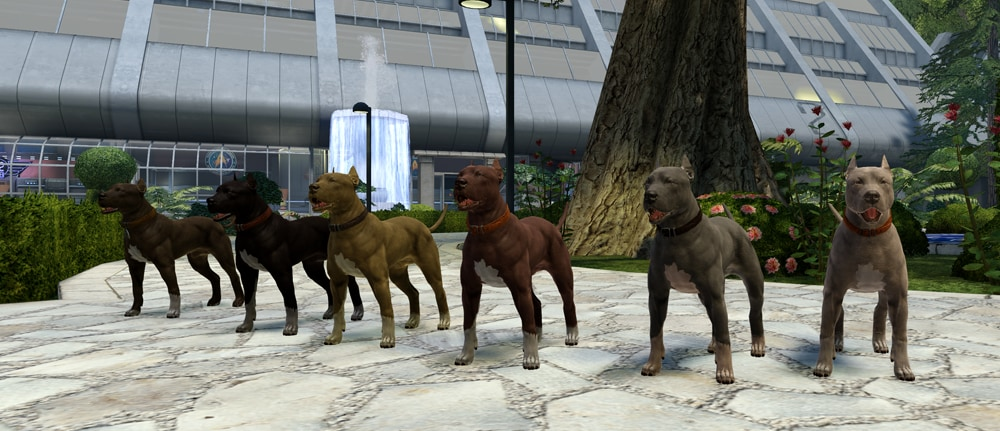 A line of pit bull terriers in the Starfleet Academy gardens
