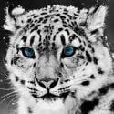 xanderleopard2#4636
